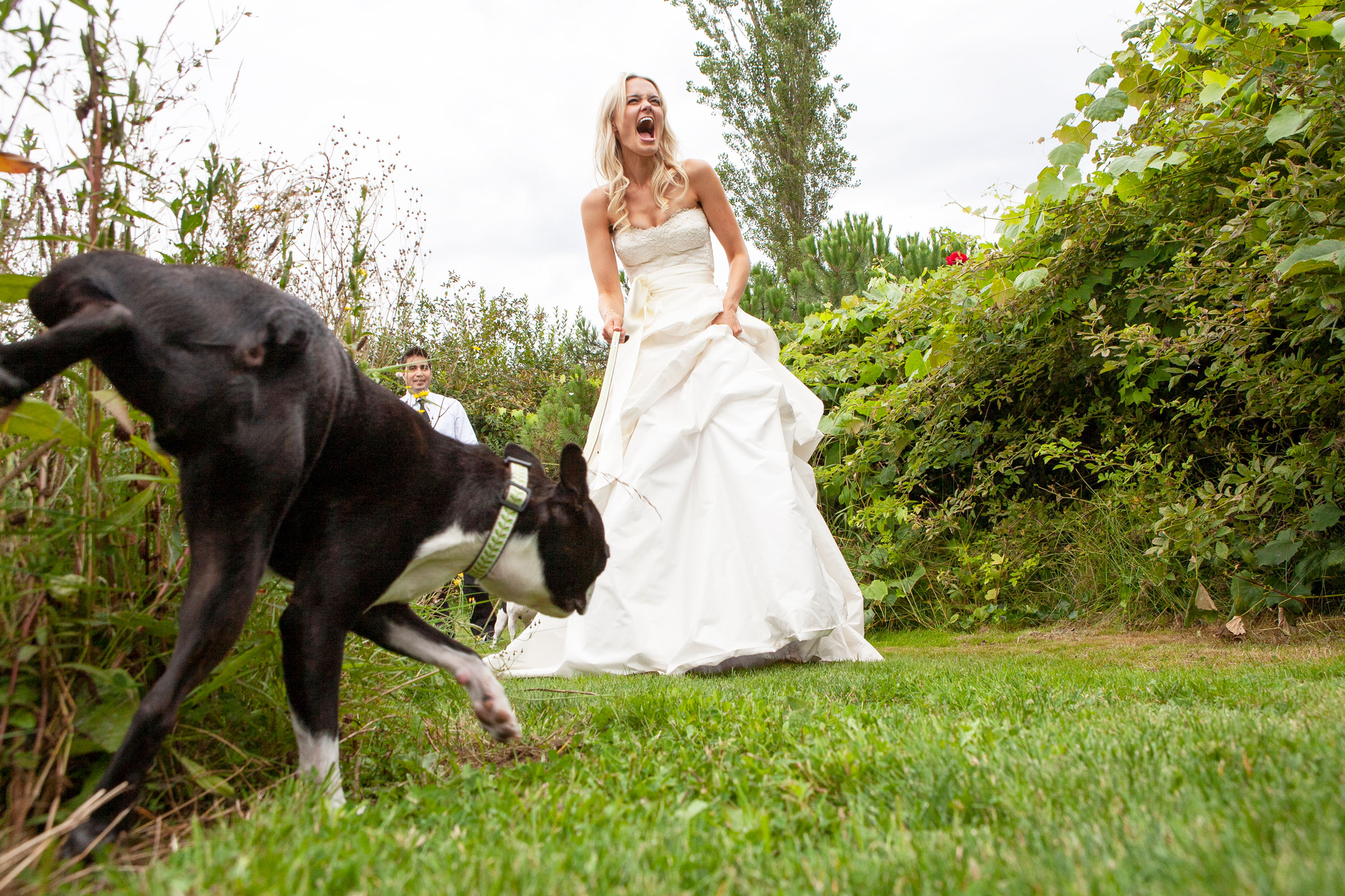 dogs-at-weddings-boxer-funny-moments-jamie1389b.jpg